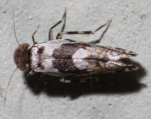 What is this? - Lithoseopsis hellmani
