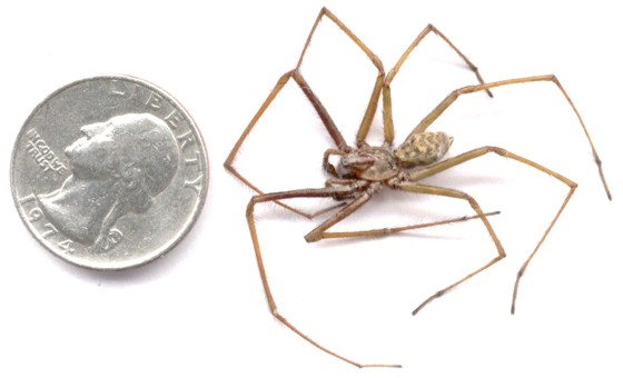Indentification of Pacific Northwest Spiders   Sciencing