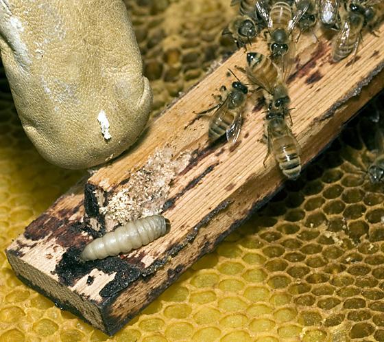 Hive destroyer