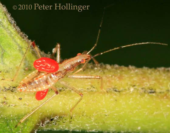 Little Bug with Big Mites(?)