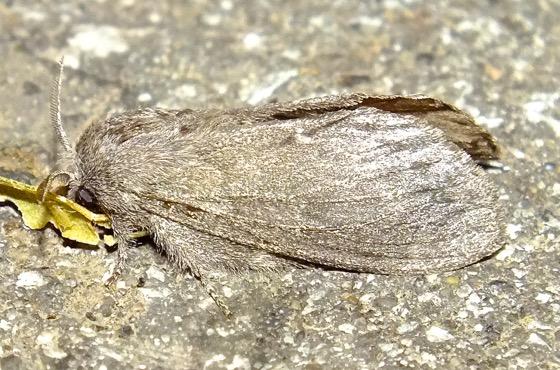 Unkown Moth