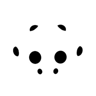Lynx Eye Arrangement - Oxyopes salticus