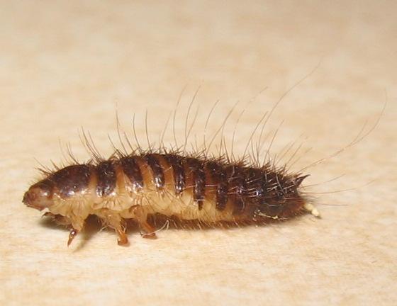 Larvae? Millipede?