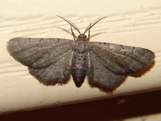 Is this another one? - Exelis pyrolaria