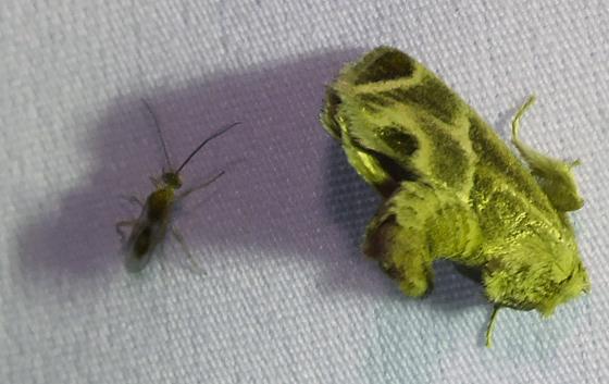 Wasp and moth