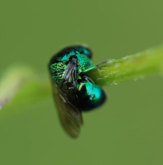 Turquoise Green Metalic Paint