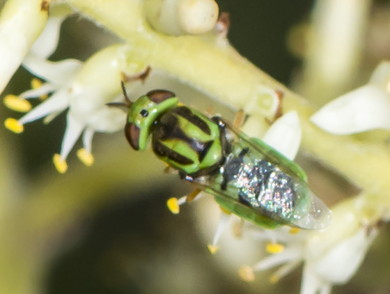 Fly ID request