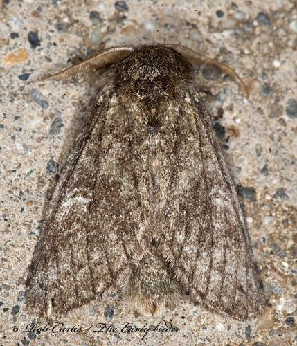 8034203 moth