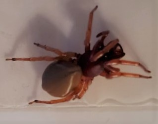 Spider ID???