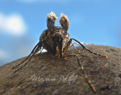 Winter Moth? - Operophtera brumata - female