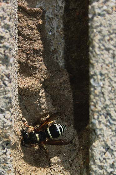 how to kill wasp nest in cinder block