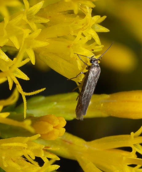 moth ID?