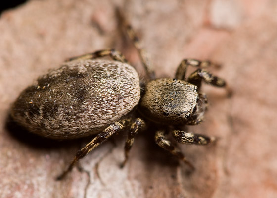 Jumper - Tutelina harti - female