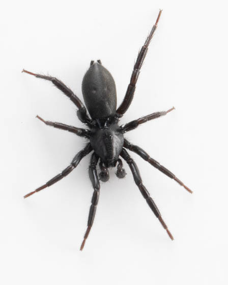 spider ID please