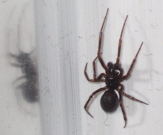 Tiny Spiders In Bathroom 28 Images Tiny Spiders In