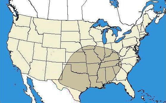 Brown Recluse Map Range of the Brown Recluse   Loxosceles reclusa   BugGuide.Net