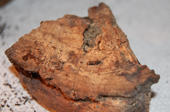 Eudesma undulata